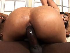Big booty black girls have nasty anal fucking! [4 movies]