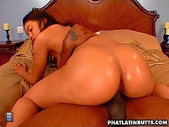 Phat Latin Butt [6 movies]